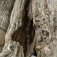 El vell dolor de l'arbre